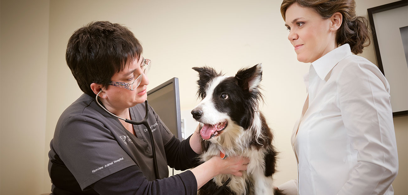 veterinarian doing a wellness exam in Etobicoke, ON