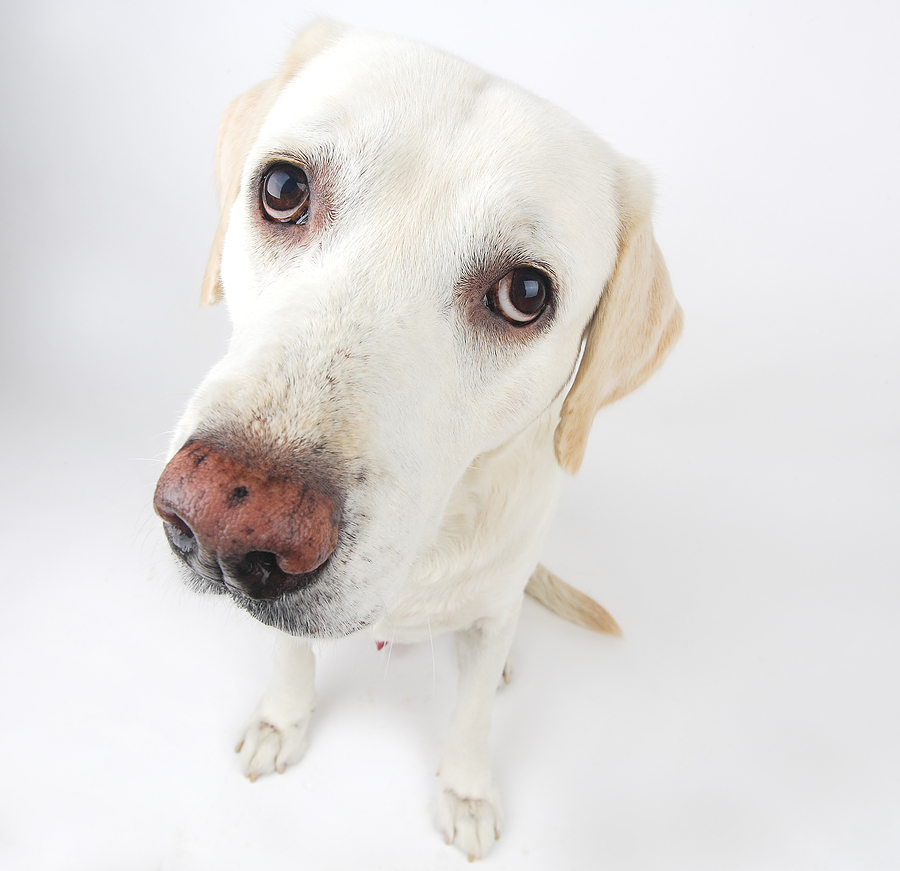 Dog looking for reviews in Etobicoke, ON