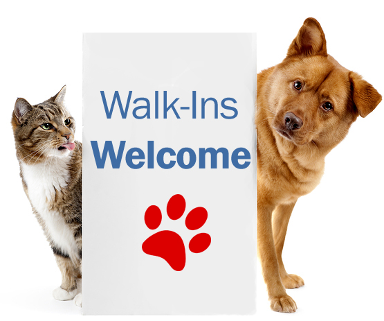 cat and dog with walk-ins welcome sign